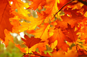 Top 5 Vacations to See the Fall Foliage